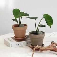 아마란스 공기정화 식물 몬스테라 소형 이태리 토분 세트