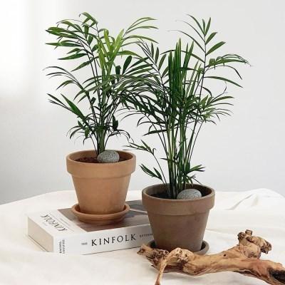 아마란스 공기정화 식물 테이블야자 소형 이태리 토분 세트