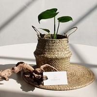 아마란스 공기정화 식물 몬스테라 소형 바구니 세트