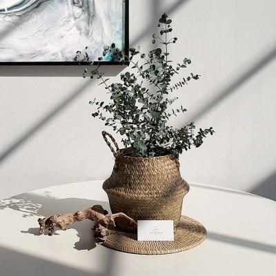아마란스 공기정화 식물 유칼립투스 바구니 세트