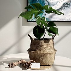 아마란스 공기정화 식물 몬스테라 중형 바구니 세트