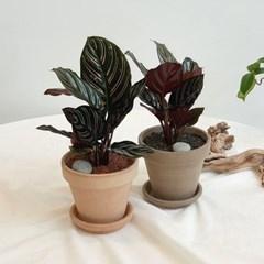 아마란스 공기정화 식물 오나타 이태리 토분 세트