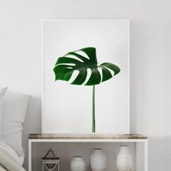 싱글몬스테라 식물 액자 나뭇잎 그림