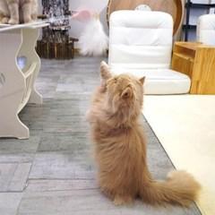 윈코 코펫 고양이 3단 고급낚시대 스트레스 해소 장난감