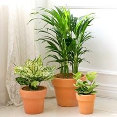 [공기정화식물] 푸른숲 토분 3종세트 A