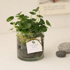 [plant] 워터코인+시푸룩스 수경재배 2SET_(704234)