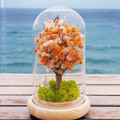 [숲앤숨] 나의 오렌지 나무 LED 무드등 - 프리저브드 드라이플라워