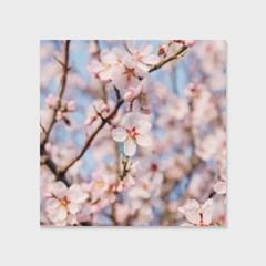 영원히 지지 않는 벚꽃 인테리어 에디션 no.02