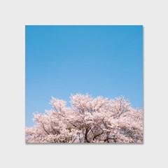 영원히 지지 않는 벚꽃 인테리어 에디션 no.04