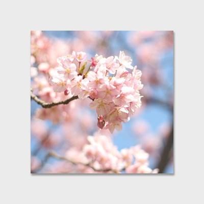 영원히 지지 않는 벚꽃 인테리어 에디션 no.03
