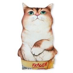 쿠션 - 박스 아기 고양이