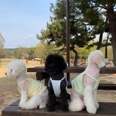 러블리댕댕 강아지 줄무늬 크롭티