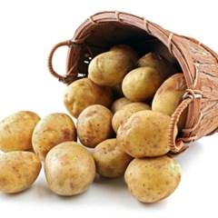 포근포근 싱싱한 감자 3kg 5kg 10kg