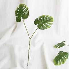2잎 몬스테라
