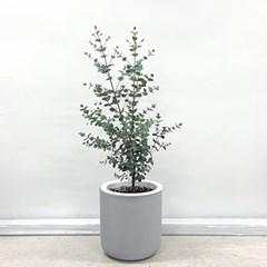 플라랜드 실내 공기정화식물 신혼집 인테리어 유칼립투스 시멘트화분