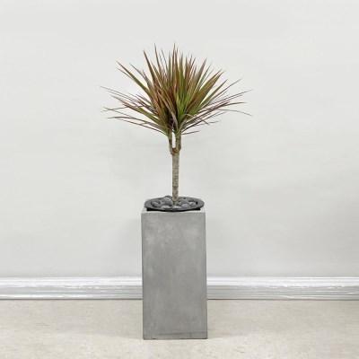 공기정화식물 키우기쉬운식물 레인보우 마지나타 시멘트 사각 화분