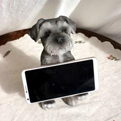 강아지 핸드폰 거치대 슈나우저