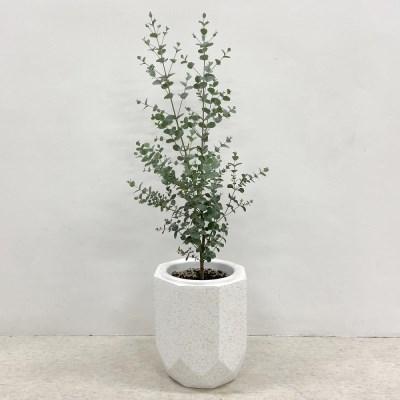 플라랜드 공기정화식물 유칼립투스 테라조 팔각 화분
