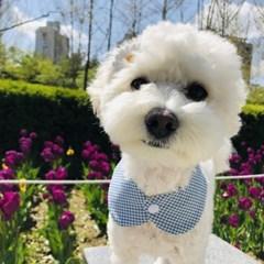 봄날케이프 강아지 고양이 스카프