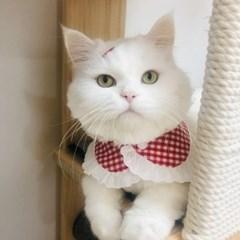 럽럽체크케이프 강아지 고양이 스카프