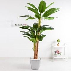 바나나트리set 250cm_KO(5-7) 조화 나무 인조 FREOFT_(1822527)