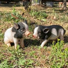 얼룩 돼지 장식품
