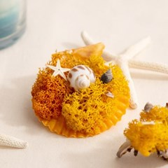스칸디아모스 가리비 장식 (오렌지)