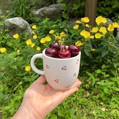 작달막한 체리들 컵 / 접시