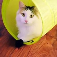 쩐이 비비드 캣터널 고양이 장난감