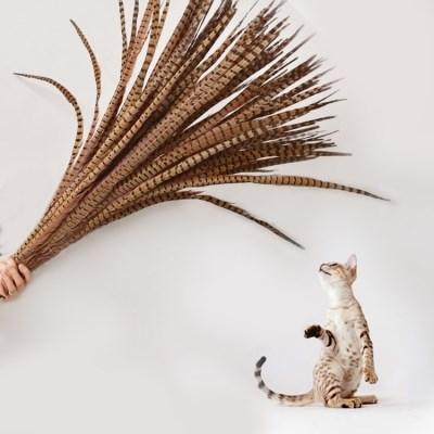1m 롱 꿩깃털 3개 고양이 깃털 낚시대 새깃털 장난감