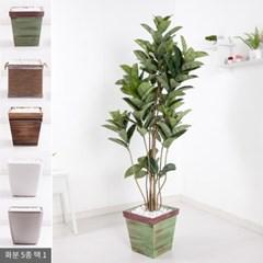 네츄럴고무나무set 185cm_KO(4-5) 조화 나무 FREOFT_(1834994)