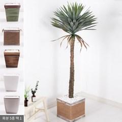 유카글로리오사set 155cm_KO(3-5) 조화 나무 FREOFT_(1834992)
