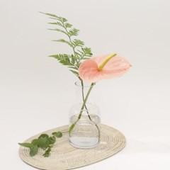오래가는 꽃, 안시리움 (생화, 전국택배)