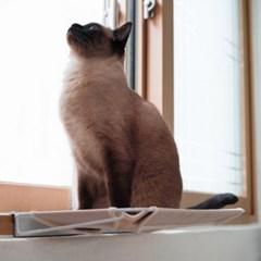 고양이 창문해먹 / 냥탄자 해먹(창문형)