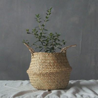 아마란스 올리브나무 바구니 세트