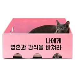 예쁜 스크래처 박스 찾으신다면 감성 노리노리캣 특가!
