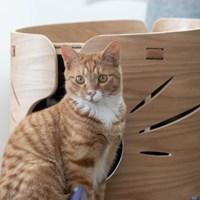원목 고양이 해먹 하우스 마이캐빈 오크