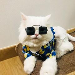강아지 고양이 선글라스 도글라스 냥글라스
