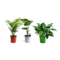 self-gardening 10~13cm 소형화분 분갈이용식물
