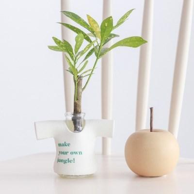 메이크정글 MANITTO NO.3 마니또팟 공기정화식물 수경화분
