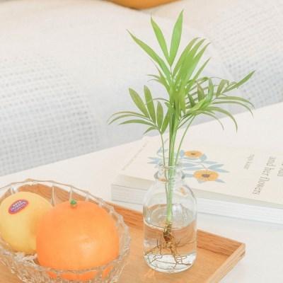 메이크정글 GLASSY NO.2 공기정화식물 유리병 수경화분