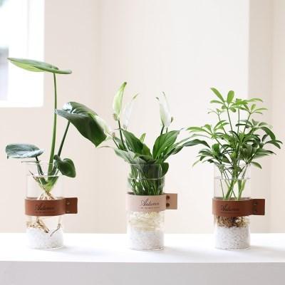 천연가습 수경식물 홀더유리병 3종