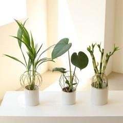 수경재배식물 골드프레임 세라믹 화병&식물 SET
