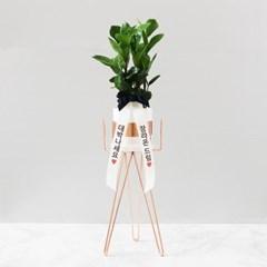 [하트6] 화분스탠드+공기정화식물세트