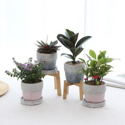 은은한 홈 카페 투톤화분  공기정화식물 4종택1