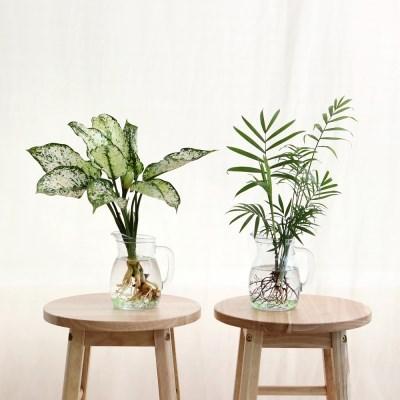 그린라이트 수경식물(중) 2종 택1