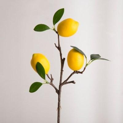 레몬 미니 가지