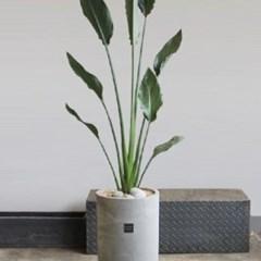 [브라더가든]세련된화분/고급관엽식물 극락조_(1360258)