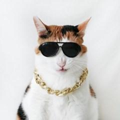 아크릴 골드체인목걸이 보잉선글라스 고양이옷 강아지옷 Miyopet