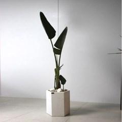 [브라더가든]거실화분/인테리어 식물 여인초_(1361045)